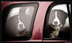 Coincés dans la voiture